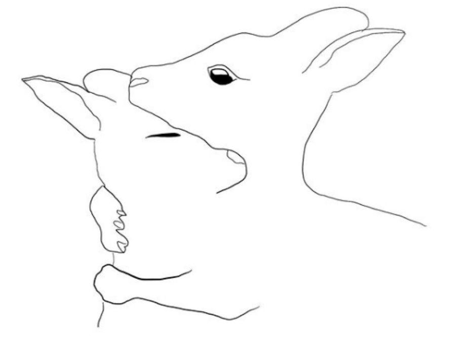Kangaroos by Jess Marney Bushfire