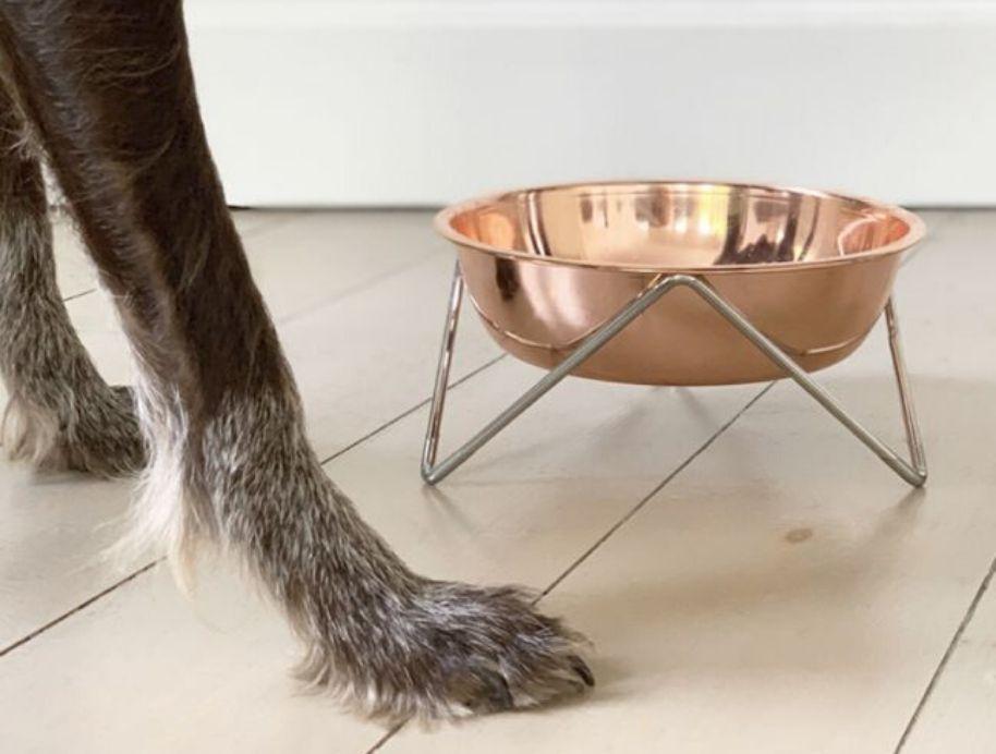 Woof pet bowl