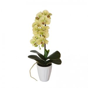 40cm Butterfly Orchid | Cream