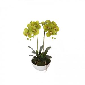 50cm Dual Butterfly Orchid | Cream