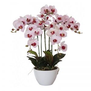 66cm Multi Butterfly Orchid | Pink