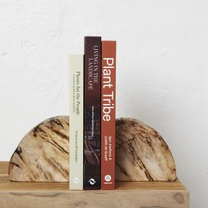 Acadia Petrified Wood Bookends