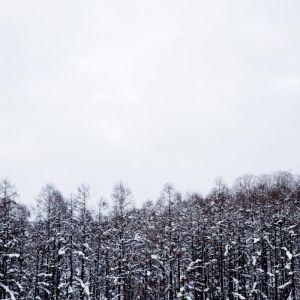 A Forest Wilderness Framed Photography Art Print