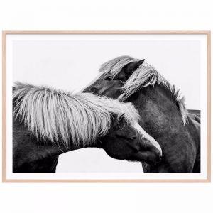 Affection Horse   Framed Print   41 Orchard
