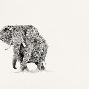 African Elephant | Limited Edition Giclée Print