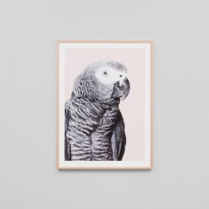 African Parrot | Framed Print
