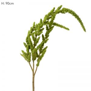 Amaranthus Green X 6 Stems