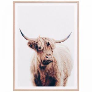 Angus Highland Cow   Framed Print   41 Orchard