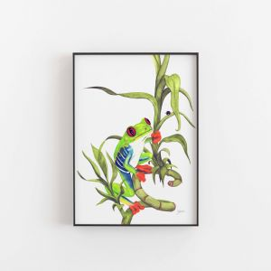 Archie the Red Eyed Green Tree Frog by Pick a Pear | Unframed
