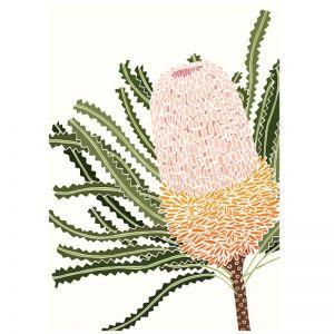 Art Print - White Banksia Hookeriana