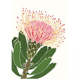 Art Print - White Pin Cushion Protea