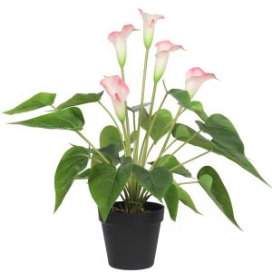 Artificial Flowering White & Pink Peace Lily/Calla Lily | 50cm