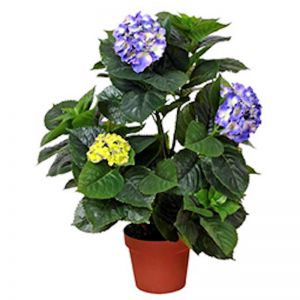 Artificial Hydrangea | 74cm | Mixed Purples and Yellows