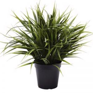 Artificial Ornamental Potted Dense Green Grass | UV Resistant | 38cm