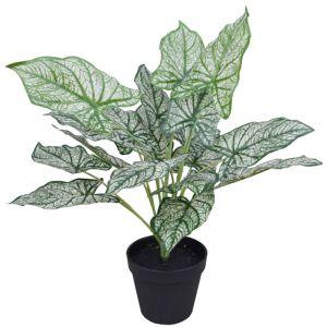 Artificial Potted White Evergreen Aglaonema 40cm