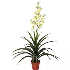 Artificial Yucca Gloriosa | 120cm