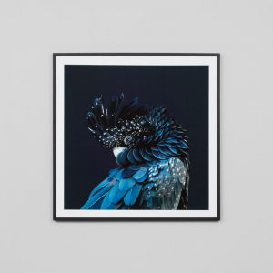 Australian Cockatoo | Framed Photographic Print | By Matthew Thomas