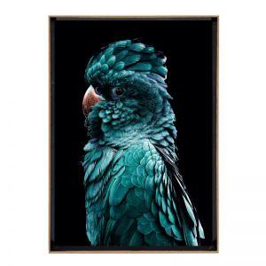 Azura Cocky | Framed Art Print