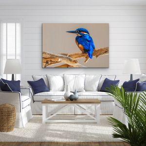 Azure Kingfisher | Blue Australian Bird Canvas And Art Print