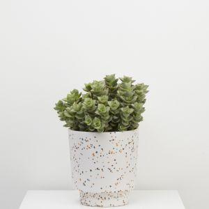 Banjo pot | Terrazzo White | Capra Designs