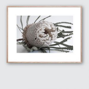 Banksia Bloom 2 | Limited Edited Framed Giclee Art Print
