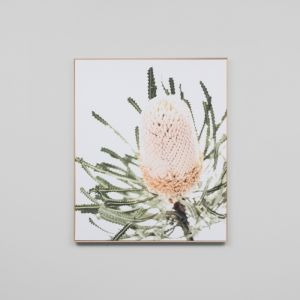 Banksia | Framed Canvas Print