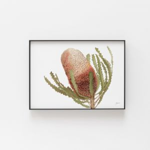 Banksia Native Living Art Flower 1 in White by Pick a Pear | Unframed