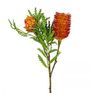 Banksia Spray with Bud & Leaf | Rust
