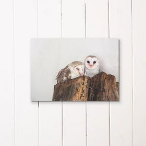Barn Owls | Unframed A3 Print by Amelia Anderson