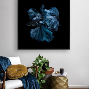 Betta | Canvas Print