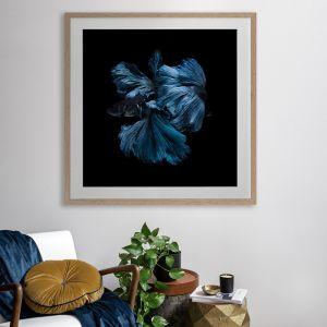 Betta | Framed Art Print
