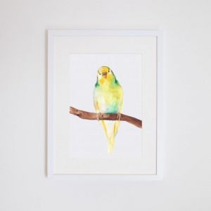Betty the Budgie Giclee Print   by For Me By Dee
