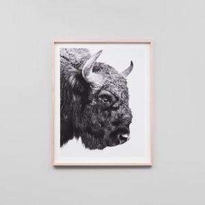 Bison | Framed Print