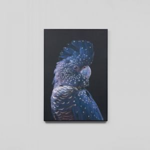 Black Cockatoo Canvas   Medium