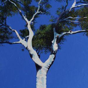 Blue angophora | Original Watercolour Artwork