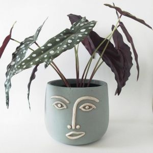 Blue Face Planter