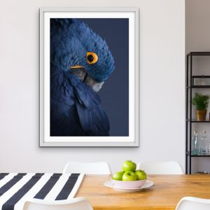Blue Parrot | Canvas Artwork