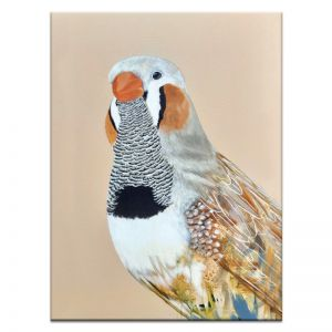 Bobby The Zebra Finch | Amanda Skye-Mulder | Canvas or Print by Artist Lane