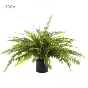 Boston Fern 80cm x 2 ferns