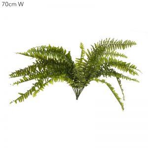 Boston Fern x 2 ferns