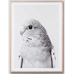 Budgie Grey | Framed Print