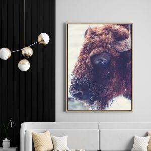 Buffalo Bruce | Drop Shadow Framed Art