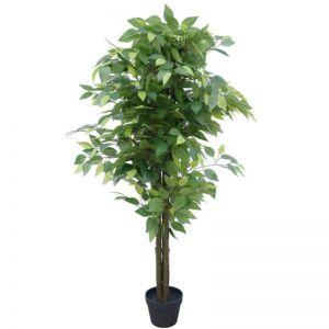 Bushy Ficus Tree | 140cm | Dark Trunk