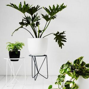 Butterfly Plant Stand