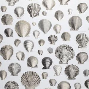 Captain Thomas Browns Shells Wallpaper | Pearl