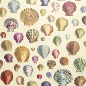 Captain Thomas Browns Shells Wallpaper | Sepia