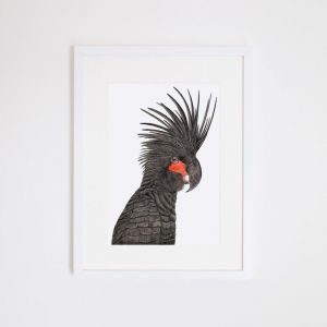 Carlos the Palm Cockatoo | Giclee Print by For Me By Dee