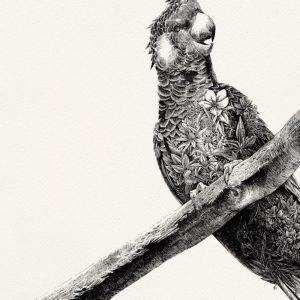 Carnaby's Black Cockatoo   Limited Edition Giclée Print