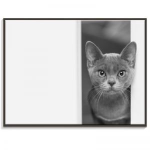 Cat | Canvas or Print by Artist Lane