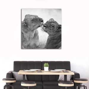 Cats - Pride Of Day | Canvas Print